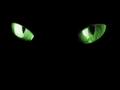Pair of cat's eyes reflecting back in darkness.