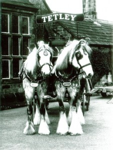 Tetley's have used Shire Horses for hundreds of years.