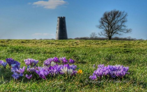 Beverley Westwood is divided into four pastures and has housed many industries over the centuries. Picture credit: Sally Gaden (IFY community)