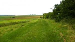 Walks MW Hawold bridle road