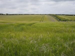 Rolling fields near Ganton