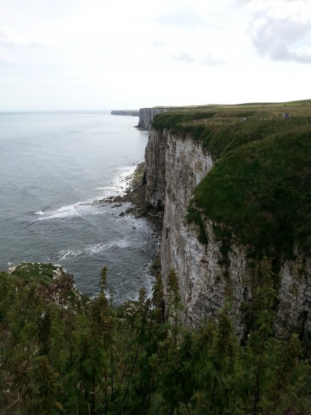 Bempton Cliffs is an internationally renowned nature reserve for seabirds who breed here every year. Picture credit: Kaz Jones (IFY community)