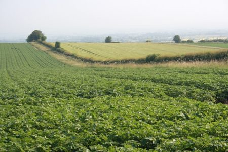 The EU has had a direct impact on agriculture in Yorkshire. Picture credit: Mick Garrat geograph wikipedia creative commons.